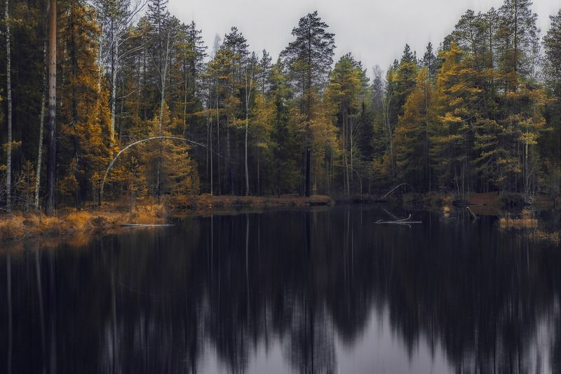 Черное зеркало. Мрачные сказки темного лесаphoto preview