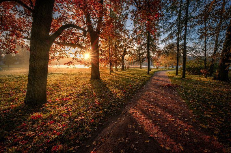 пушкин, царское село, парк, осень, дубы, октябрь, золотая осень, листопад, утро, рассвет Тропинки в Царском селеphoto preview
