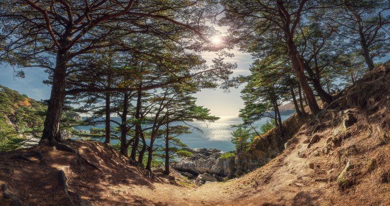 панорама, море, скалы, деревья ***photo preview