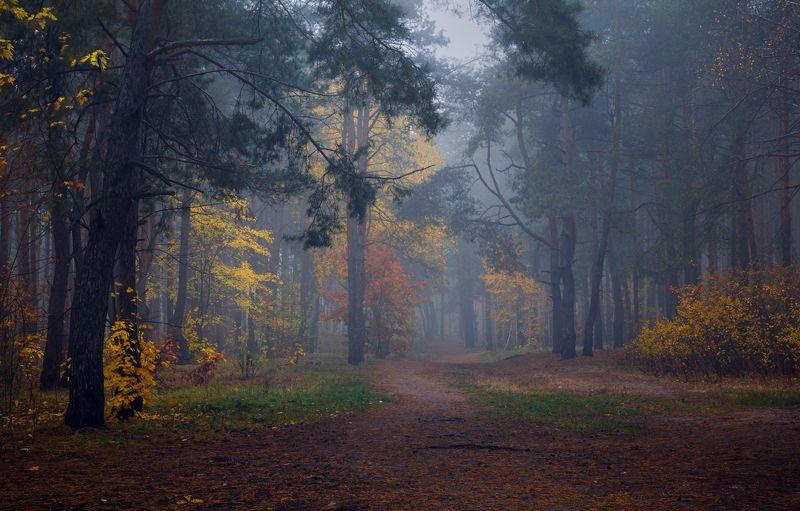 лес, осень, октябрь, утро, рассвет, туман Под сизым покрывалом октябряphoto preview