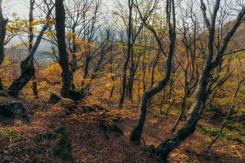Первый день ноября в горном лесуphoto preview