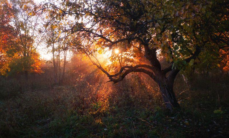 утро, осень, дымка, Октябрьское солнцеphoto preview