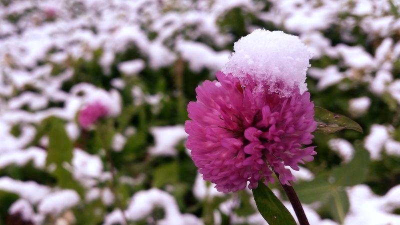 Холодный деньphoto preview