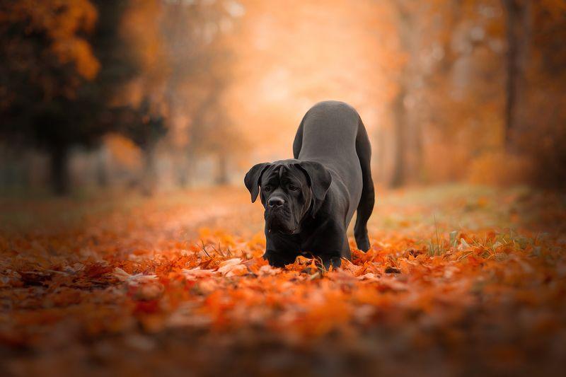 Осенний Корсphoto preview