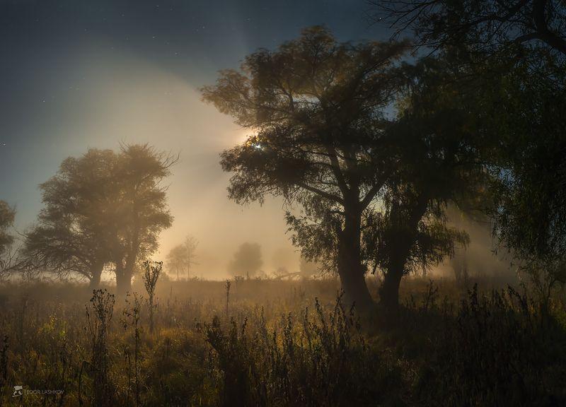 pentax645z, pentax, астраханская область, ночь, полнолунье, луна, лучи, туман, ива, дерево, деревья, магия, свет, Из серии \