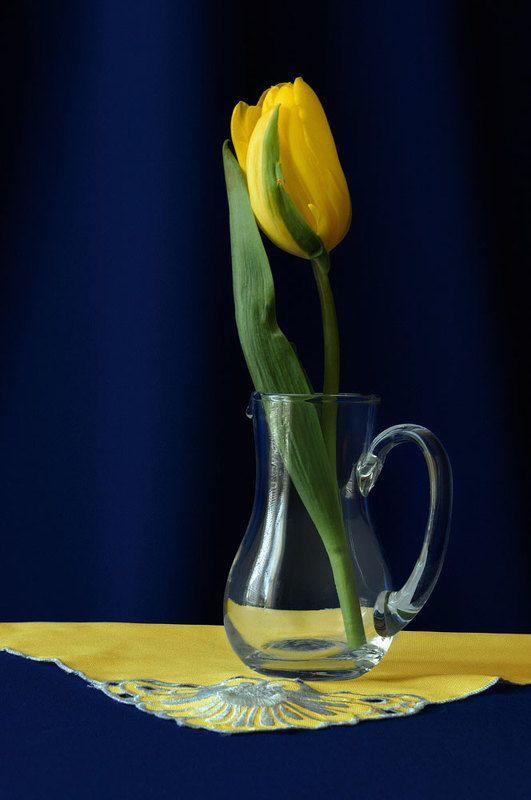 жёлтые тюльпаны,,photo preview