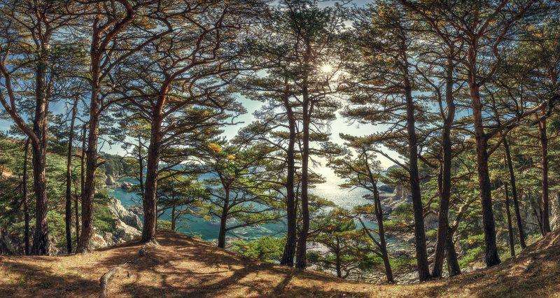осень, деревья, море, скалы, панорама ***photo preview