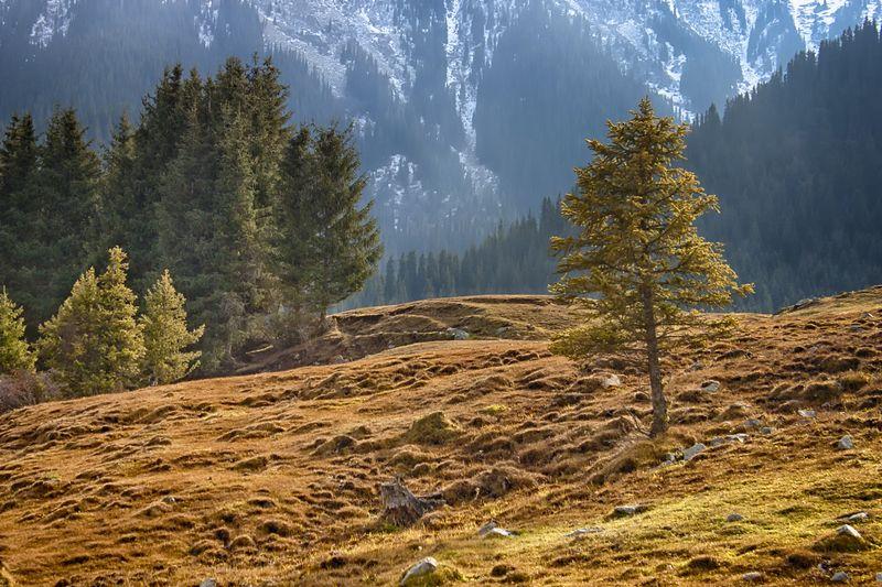 кыргызстан, горы Солоphoto preview