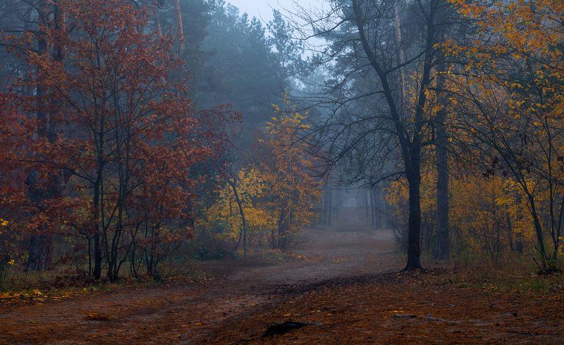 лес, осень, октябрь, утро, рассвет, туман, синий, индиго, сумерки Туман индиго лёг на старый лесphoto preview