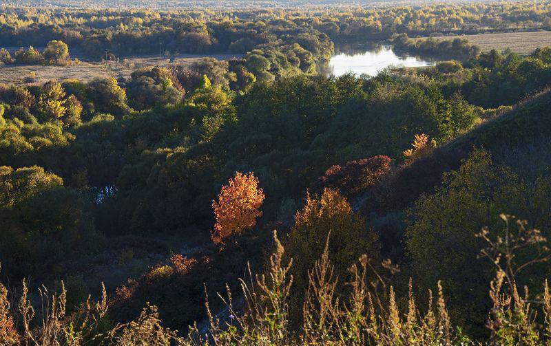 nevant60, пейзаж, красота, лес, осень Осенний вечерphoto preview