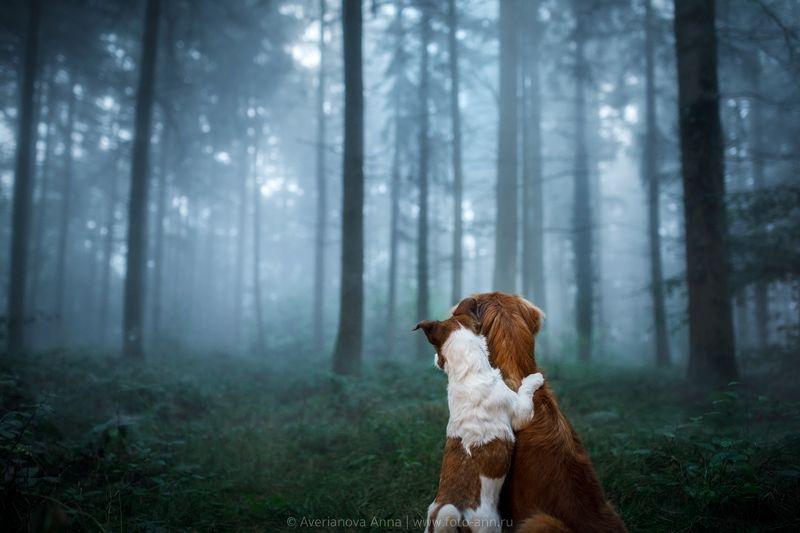 собака, туман photo preview