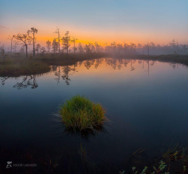 фототур, ленинградская область, сосна, болото, рассвет, туман, солнце, оранжевый, отражение, озеро, остров, трава, вода Островокphoto preview