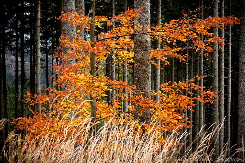 autumn Firephoto preview
