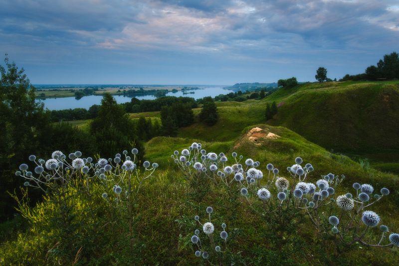 россия, рязанская область, константиново, ока, пейзаж, природа, лето, туман, река, закат солнца, закат, сумерки, цветы, мордовник шароголовый \
