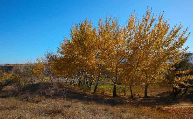 Осень золотая..photo preview