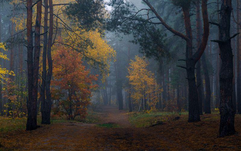Всё чаще туманы стают холоднееphoto preview