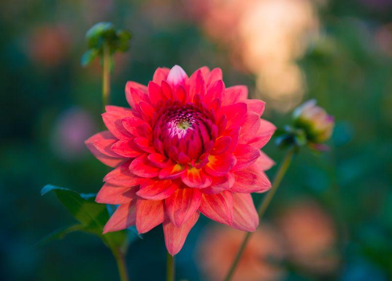 цветы, хризантемы Приютилась осень в хризантемахphoto preview