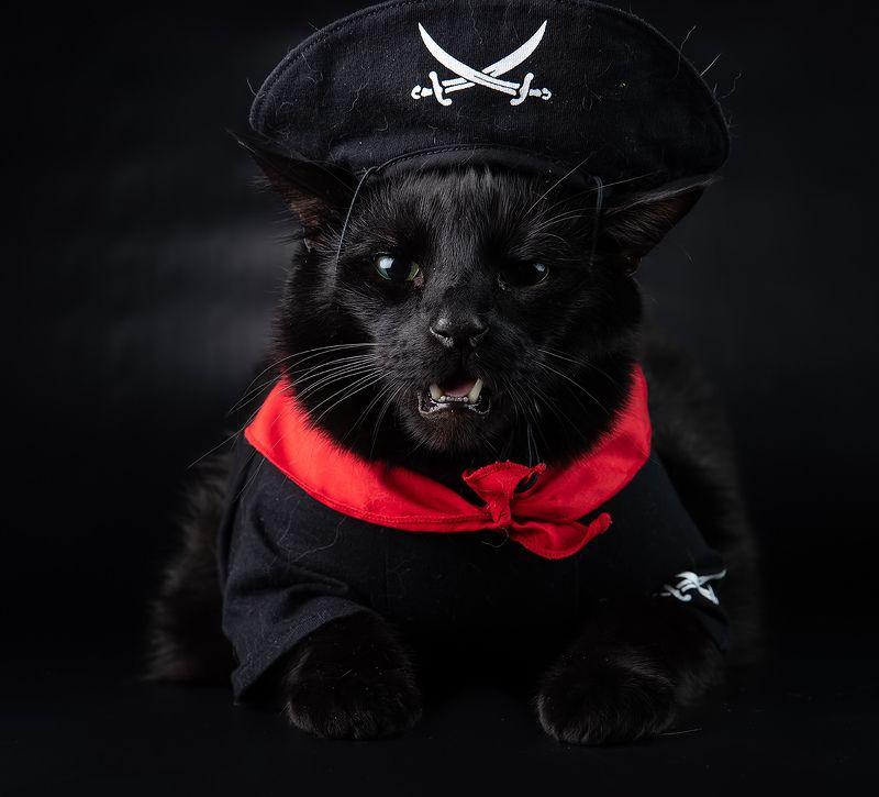 кузя, рыжик, маркиз, кот, кошка, сat, домашнии питомцы Пираты - Кузя, Рыжик и Маркизphoto preview