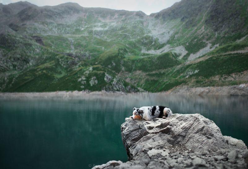 собака, природа, горы отдыхphoto preview