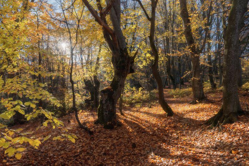 Прогулка в осеннем лесуphoto preview