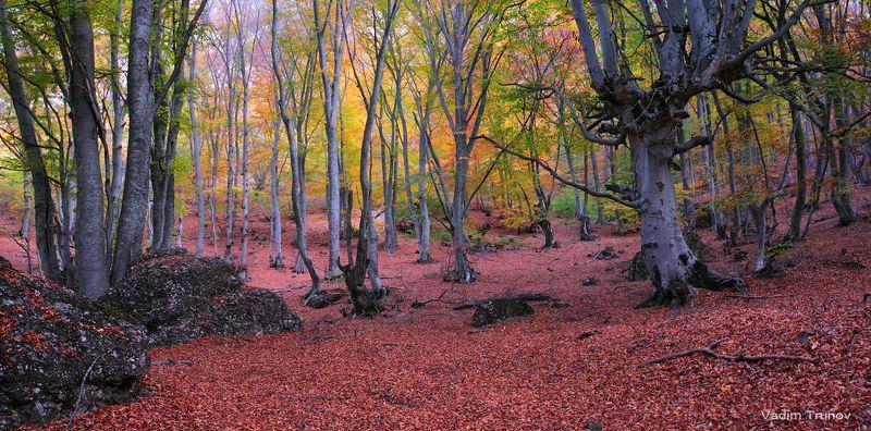 Осень в буковом лесуphoto preview