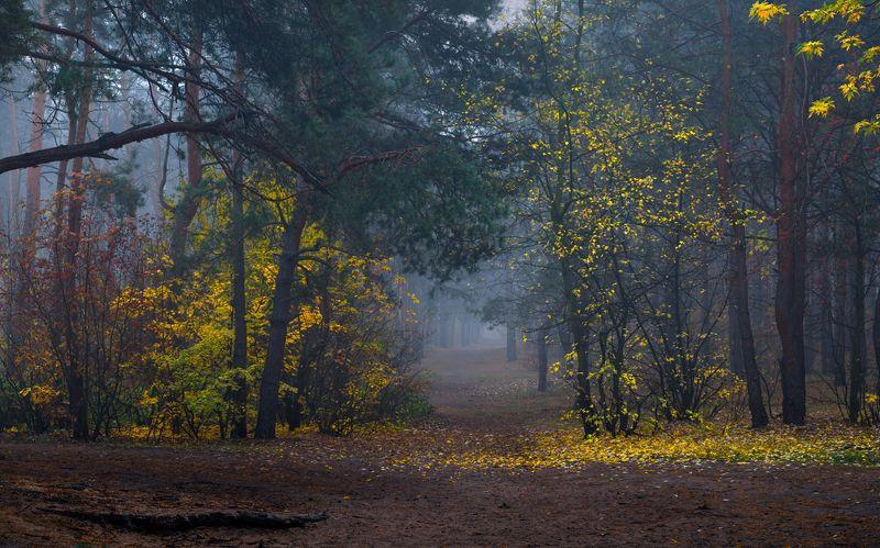 осень, лес, октябрь, сумерки, туман Всё холодней становятся туманыphoto preview