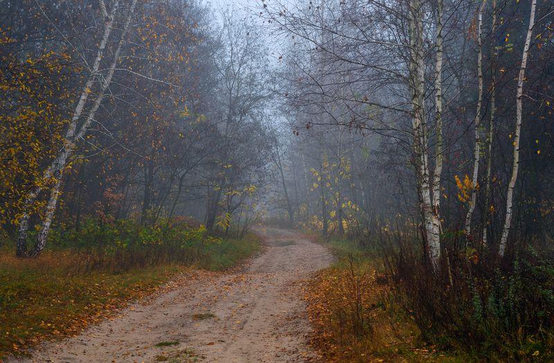 лес, осень, ноябрь, туман Редеет лес, холодней стали ночиphoto preview