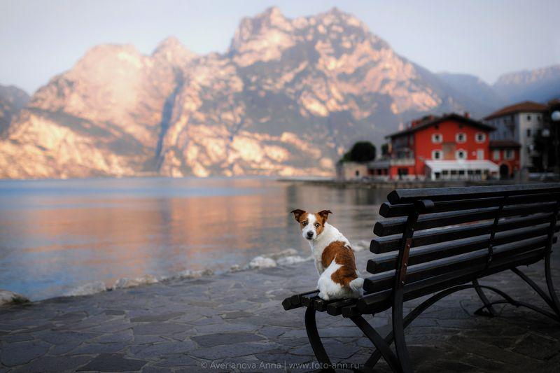 собака, горы, озеро photo preview