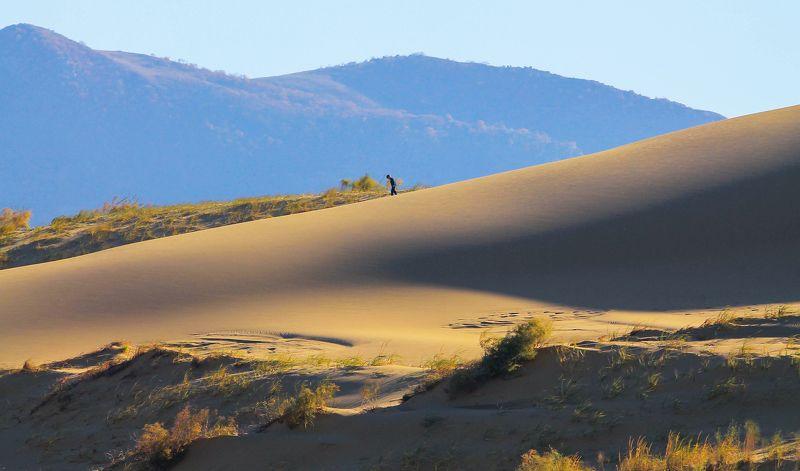 песок,осень,природа,жёлтые пески,сав Сары кум.. Жёлтые пески..photo preview