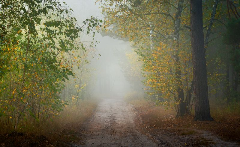 лес, осень, октябрь, утро, рассвет, туман Белый туман молочный утром накроет лес..photo preview
