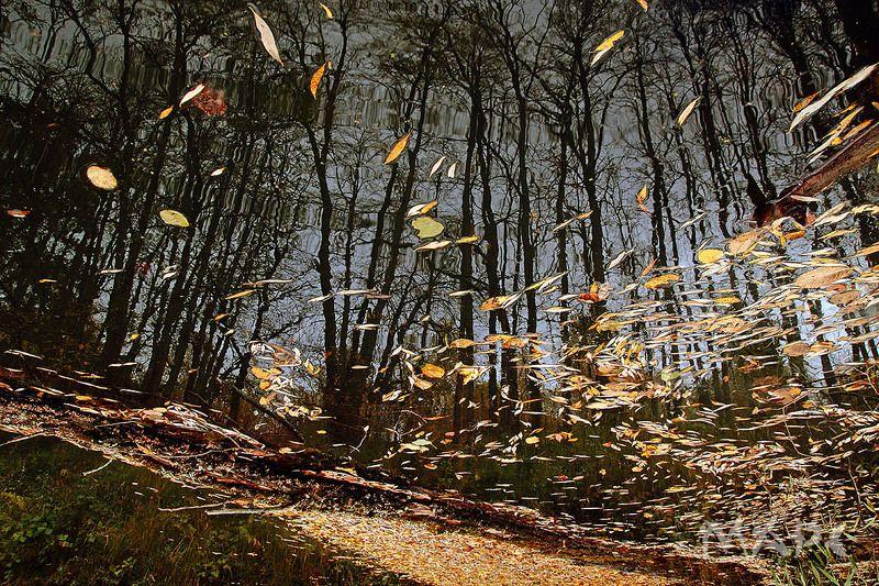 пейзаж  река листья осень октябрь Осень в рекеphoto preview
