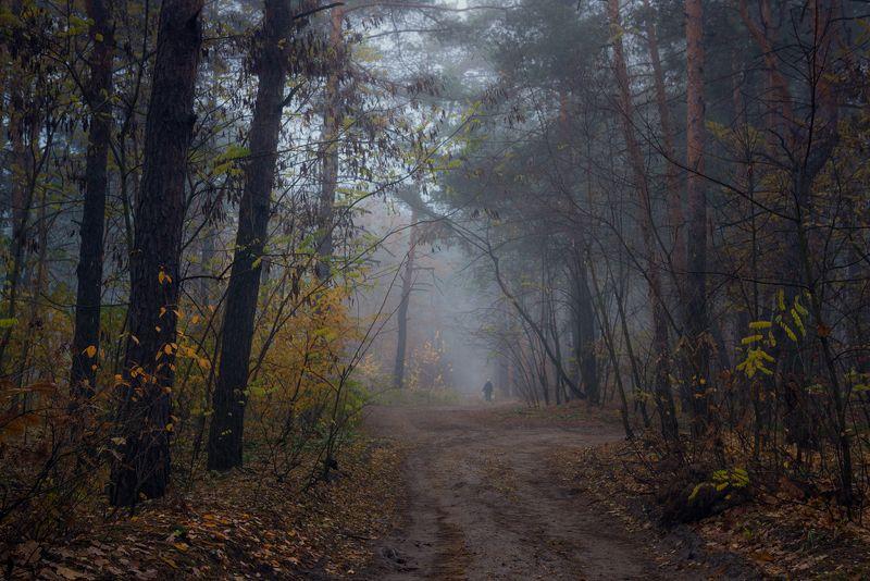 лес, осень, ноябрь, сумерки, туман Мнится, мерещится в мареве том: тётка с ведром и гриб под кустомphoto preview