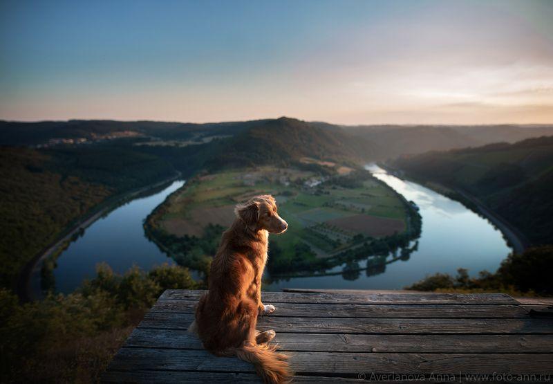 собака, природа, река photo preview