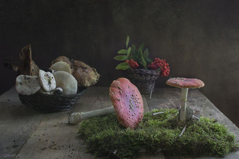 композиция,натюрморт,грибы,крынка,горшочек,лето,осень Грибы  всякиеphoto preview