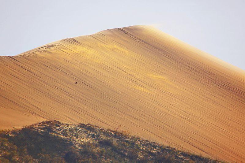 песчаная гора,песок,пейзаж,дагестан.. Песчаная гора.. Сары кум (Желтые пески..photo preview