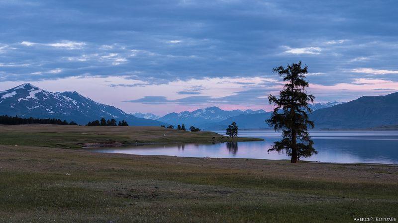 монголия, горы, алтай, рассвет, озеро, дерево, природа, пейзаж, лето, mongolia, mountains, altai, dawn, lake, tree, nature, landscape, summer Озеро Хотон-Нуурphoto preview