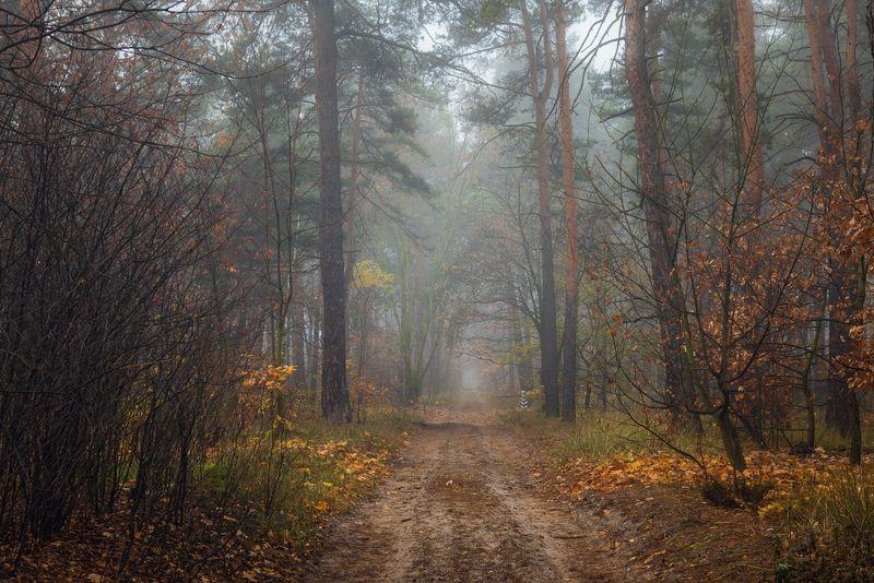 осень, лес, ноябрь, туман, сырость Пустеют долы леса,  холодаетphoto preview