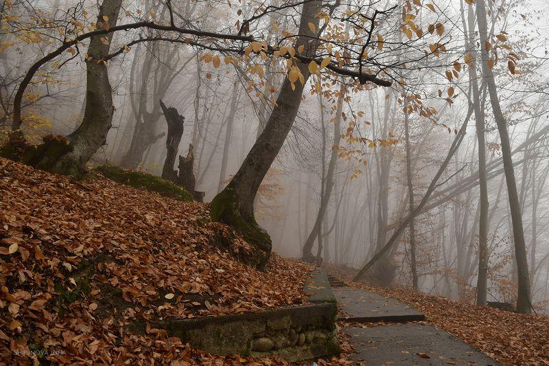 Туманная осеньphoto preview