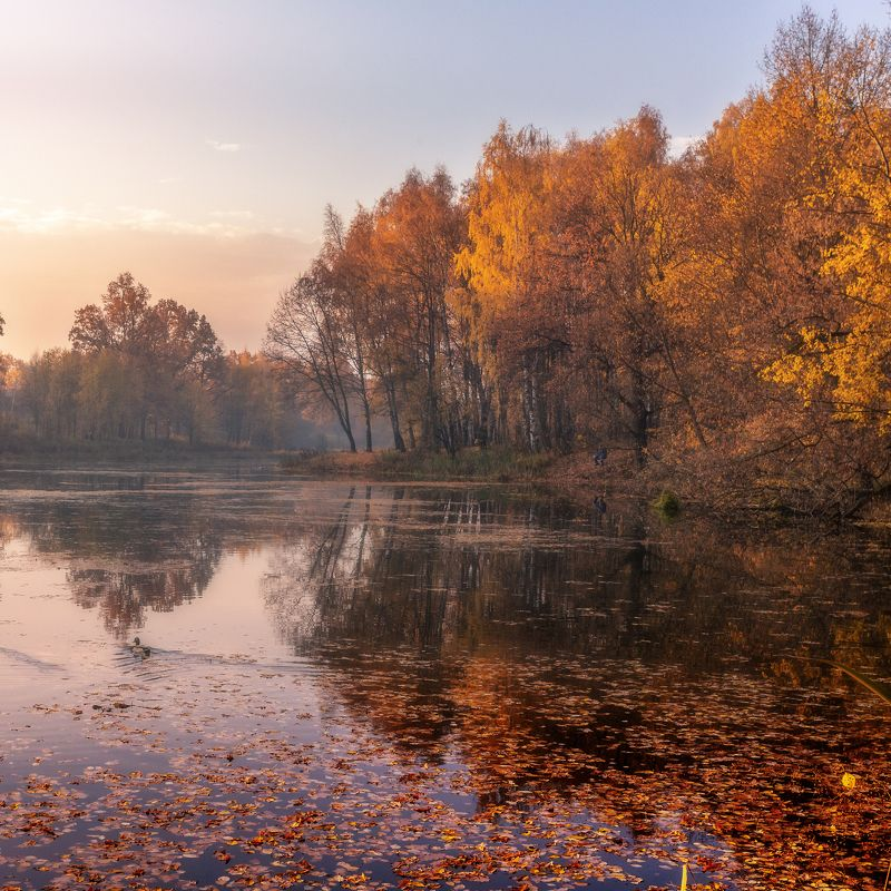 природа, пейзаж, осень, подольск ***photo preview