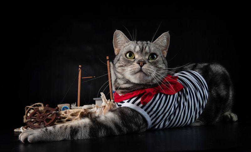 кузя, рыжик, маркиз, кот, кошка, сat, домашнии питомцы Моряки - Маркиз, Кузя и Рыжикphoto preview