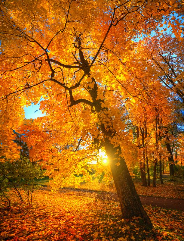 золотая осень в Царском селе...photo preview