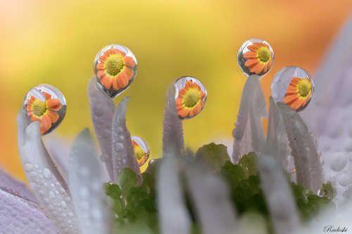 Dew sculptures