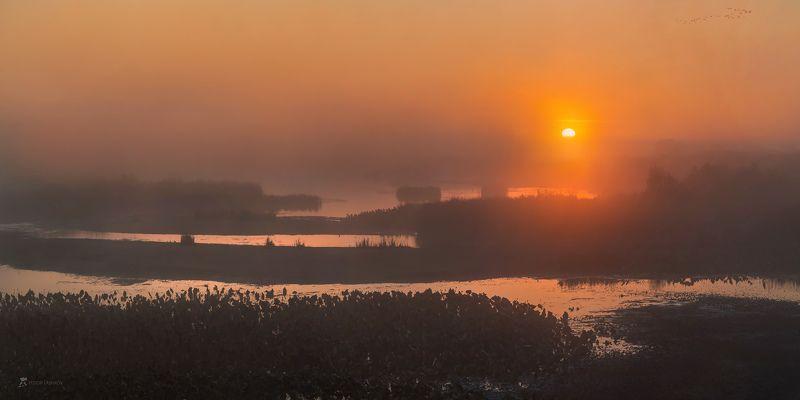 астраханская область, река, рассвет, туман, вода, волга, заповедник, астраханский государственный биосферный заповедник, осень, тростник, заросли, заря, култучная, дельта, солнце, птицы, отмель, Осенний туманный рассвет над дельтойphoto preview
