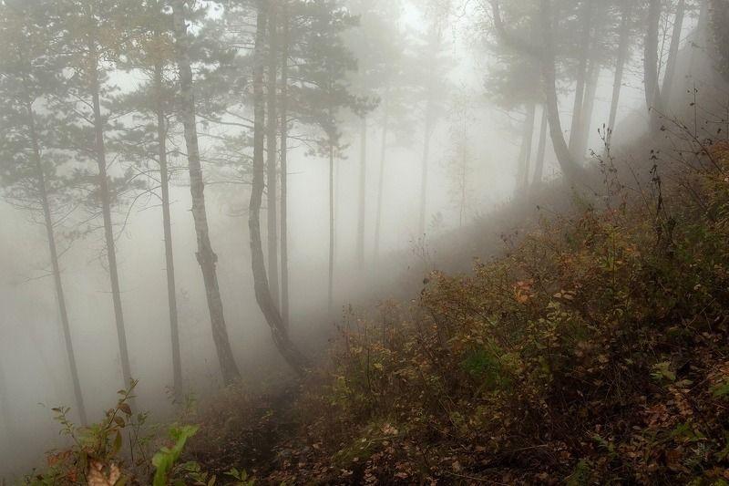 мана. манская петля.перекоп.туман. Прогулка по туману.photo preview