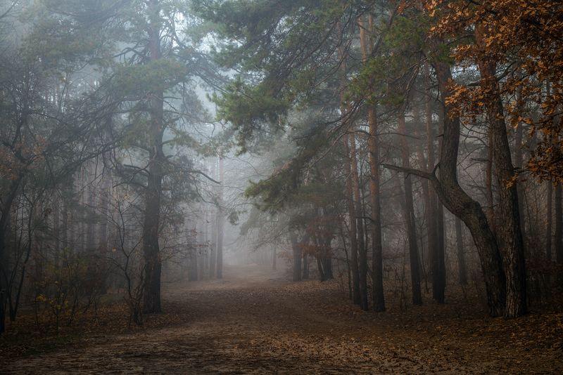лес, осень, ноябрь, туман Плывут туманы белыеphoto preview