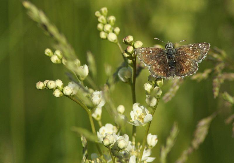 Бабочка ***photo preview