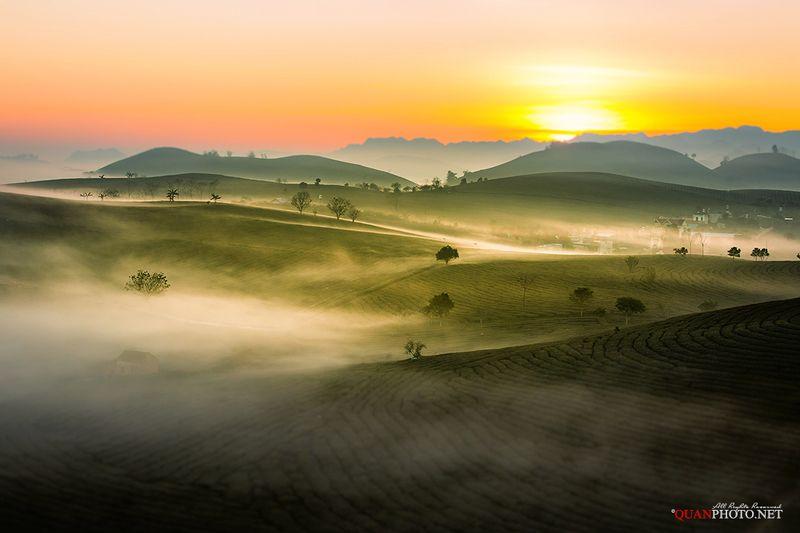 quanphoto, landscape, morning, sunrise, dawn, tea, mountain, mist, misty, plantation, highland, plateau, vietnam Misty Morningphoto preview