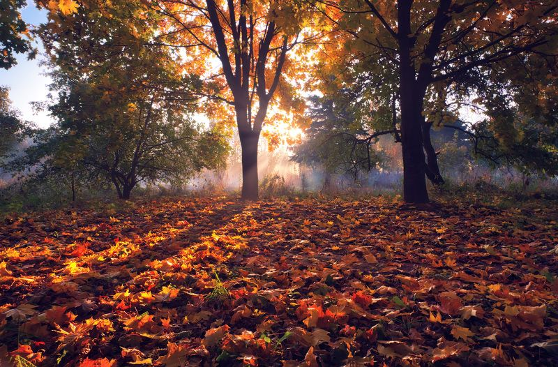 утро, сень, туман, солнце, Рыжая осеньphoto preview