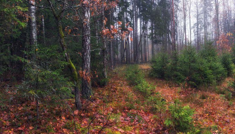 ноябрь, лес, осень, Про осеньphoto preview