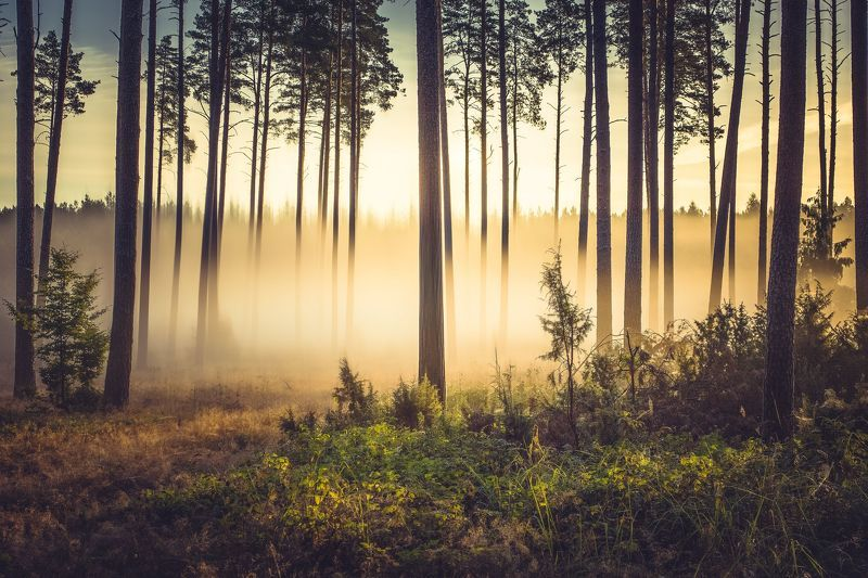 fog,forest,nature,landscape,sunlight,sky,mist,trees,dawn, Forest in the morning lightphoto preview